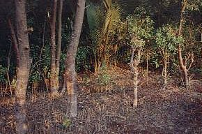 The Sunderbans- the largest mangrove forests of the world - thretened