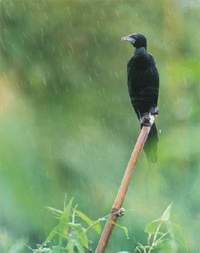 Birds of Bangladesh - BANGLA-WEB