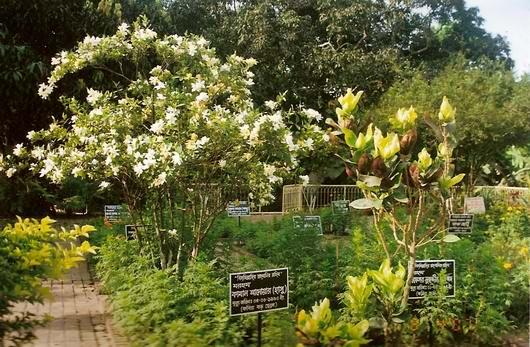 jasimuddin's family graveyard, Ambikapur Faridpur