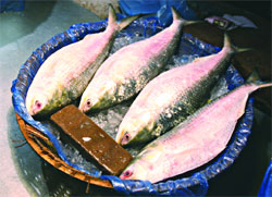 hilsa too dear