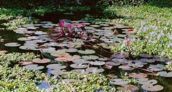 Poet's mother's pond