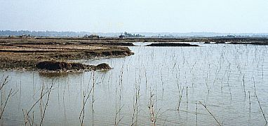 Chakuria Mangrove forest cleared for Shrimp Export